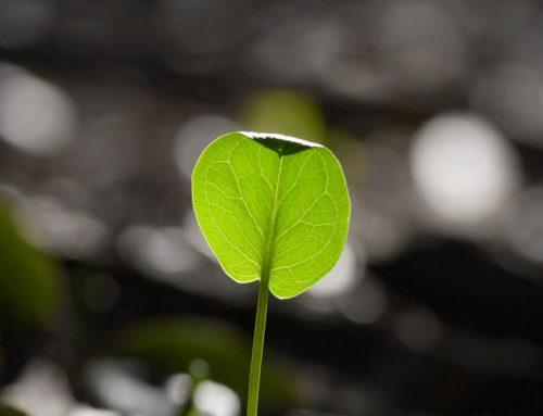 Het overloop effect van planten op de werkvloer