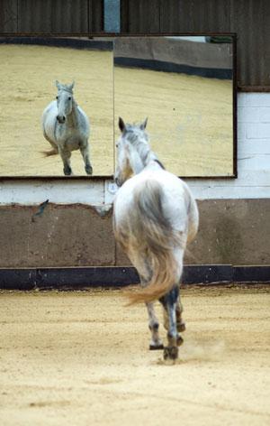 Triangis | Coaching met paarden